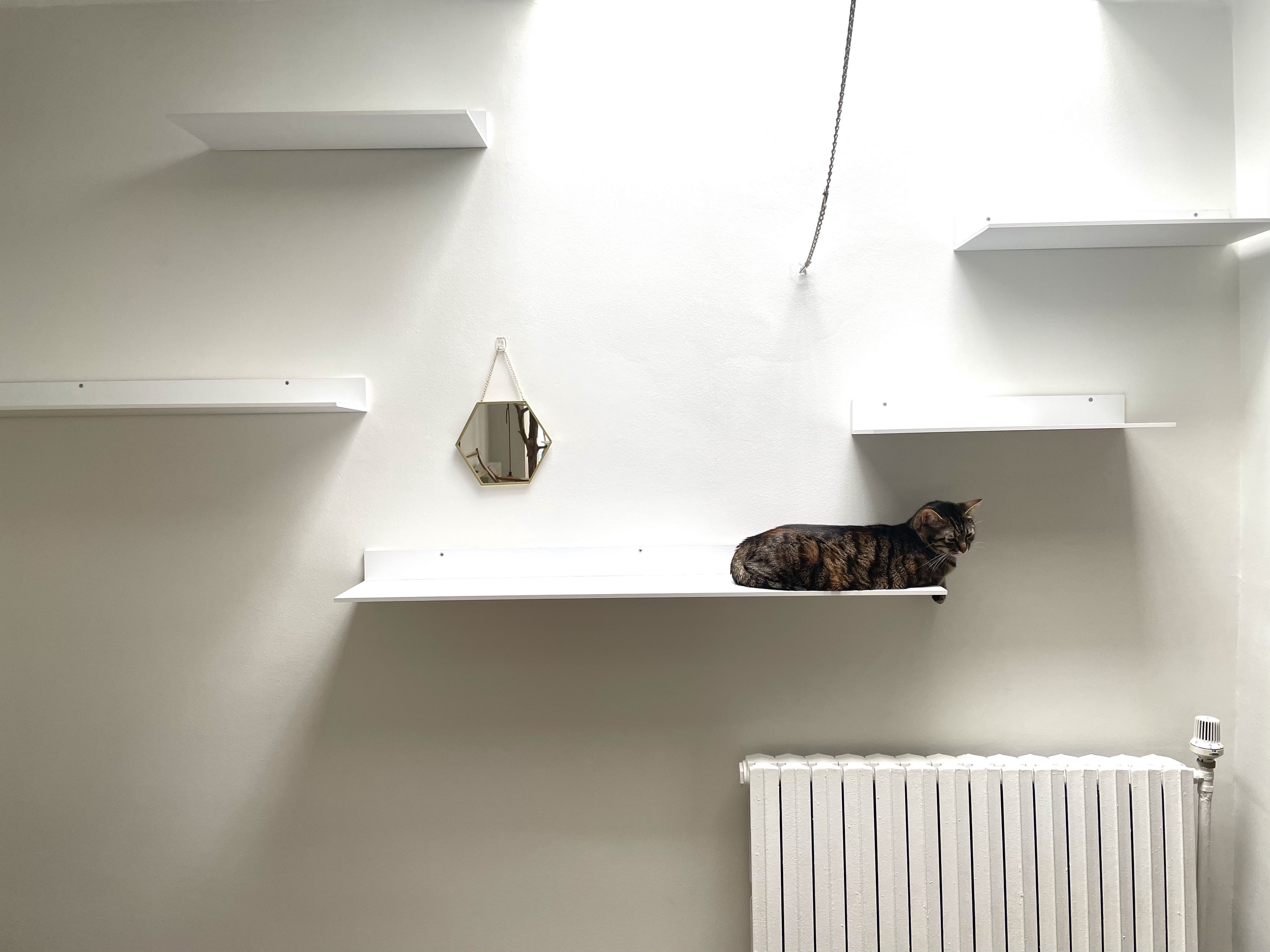 White wall with white shelves, mirror, radiator, and a cat.