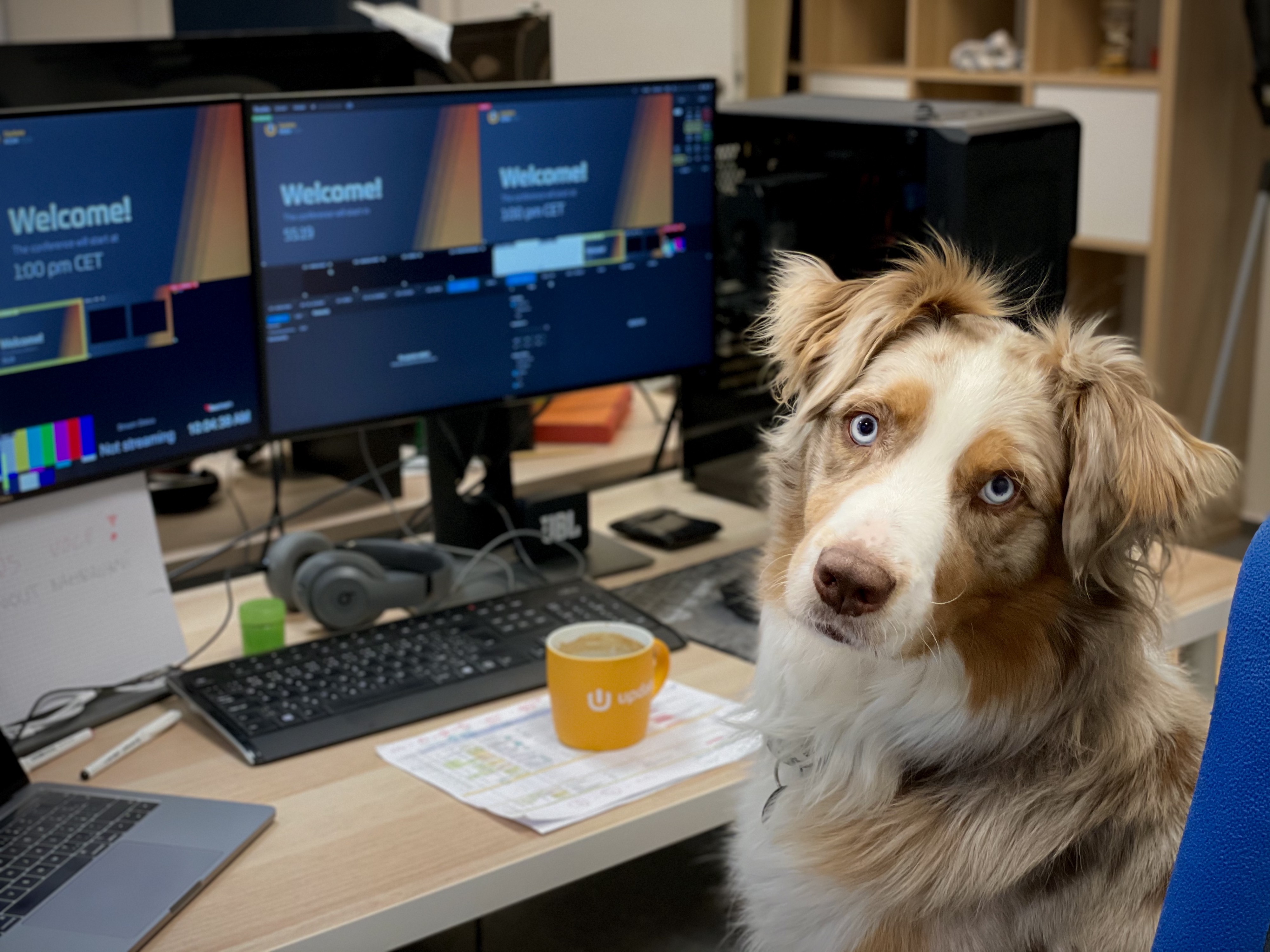 Dog sitting in front of computer monitors, turned to look at the camera