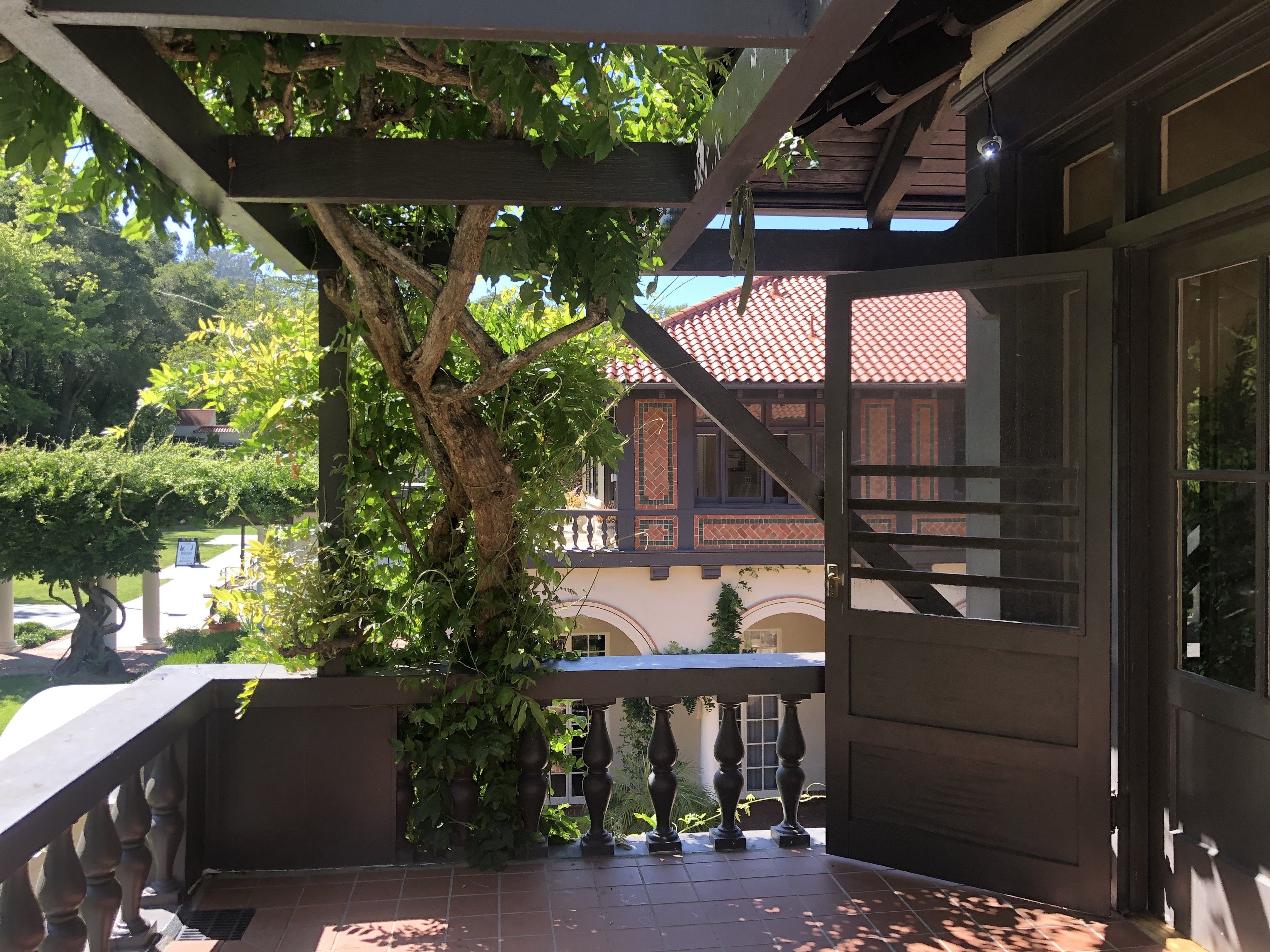 large vine growing up and over a pergola with view of house behind