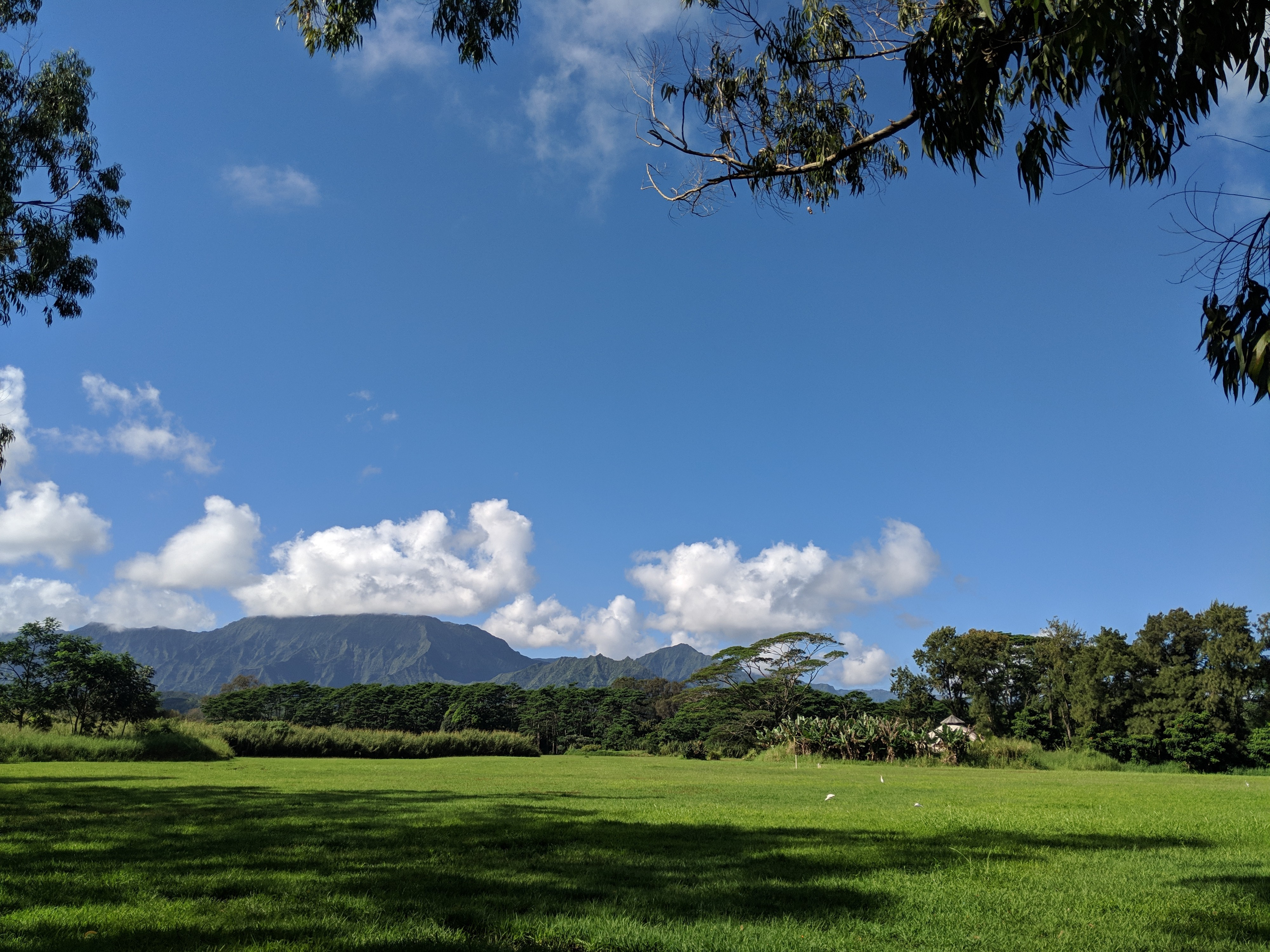 A view of mountains, green grass, and clear blue skies over a pasture on the island of Kauai.