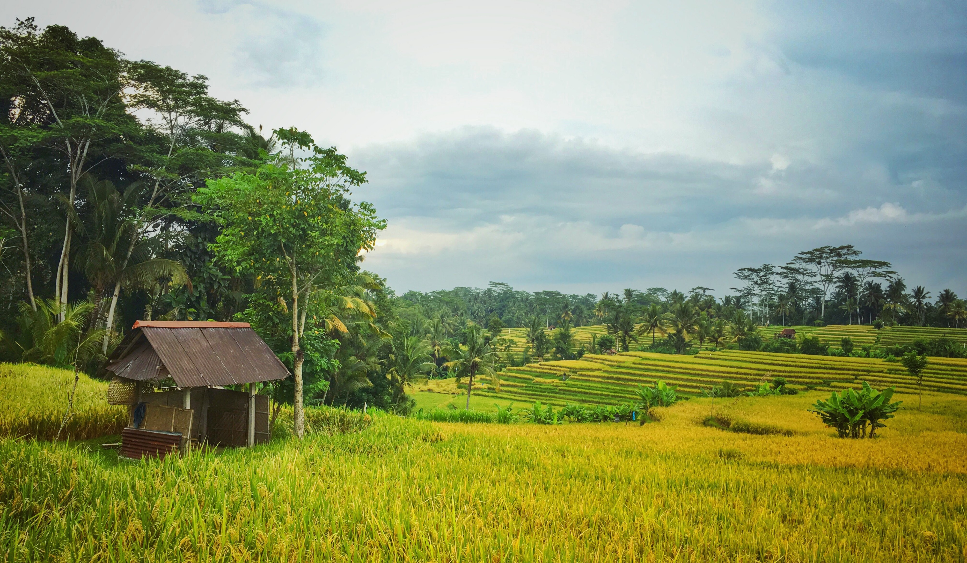 """My """"Permanent"""" Pain Condition & The Balinese Shaman Who"""