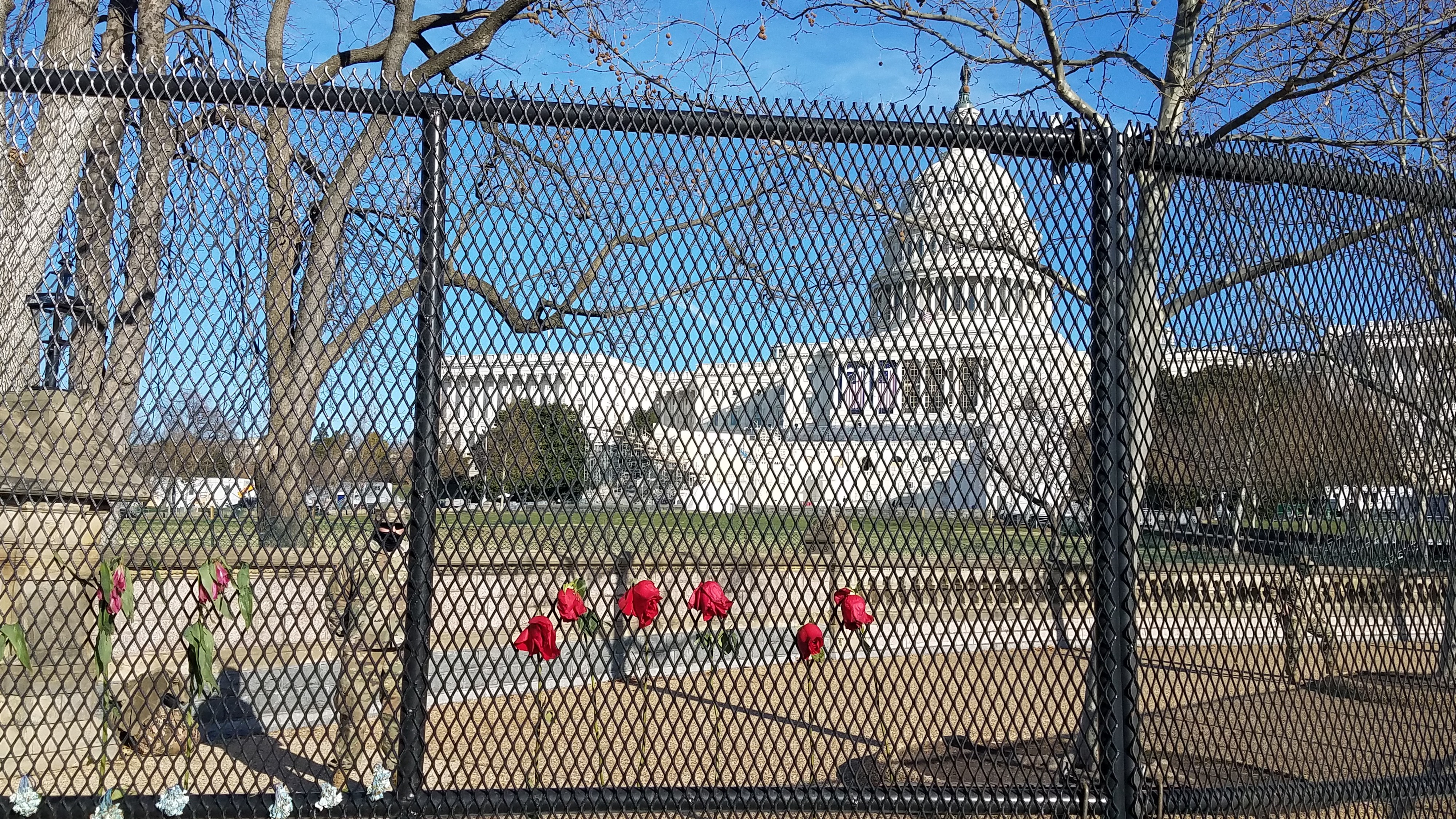 Photo of US Capitol, flag at half staff with National Guard standing watch behind newly-erected fence adorned with red roses