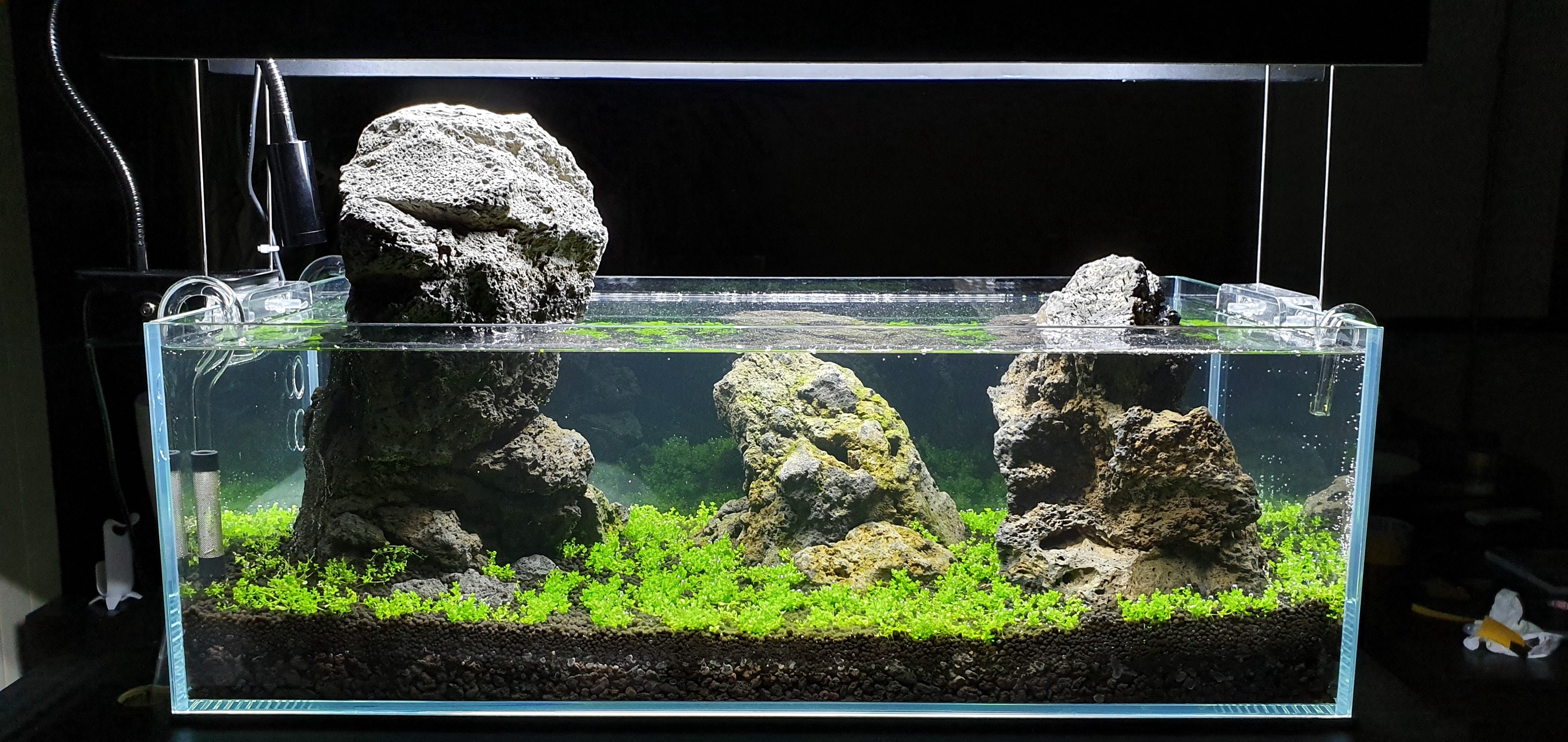 The Simplicity Of Aquascaping Basics