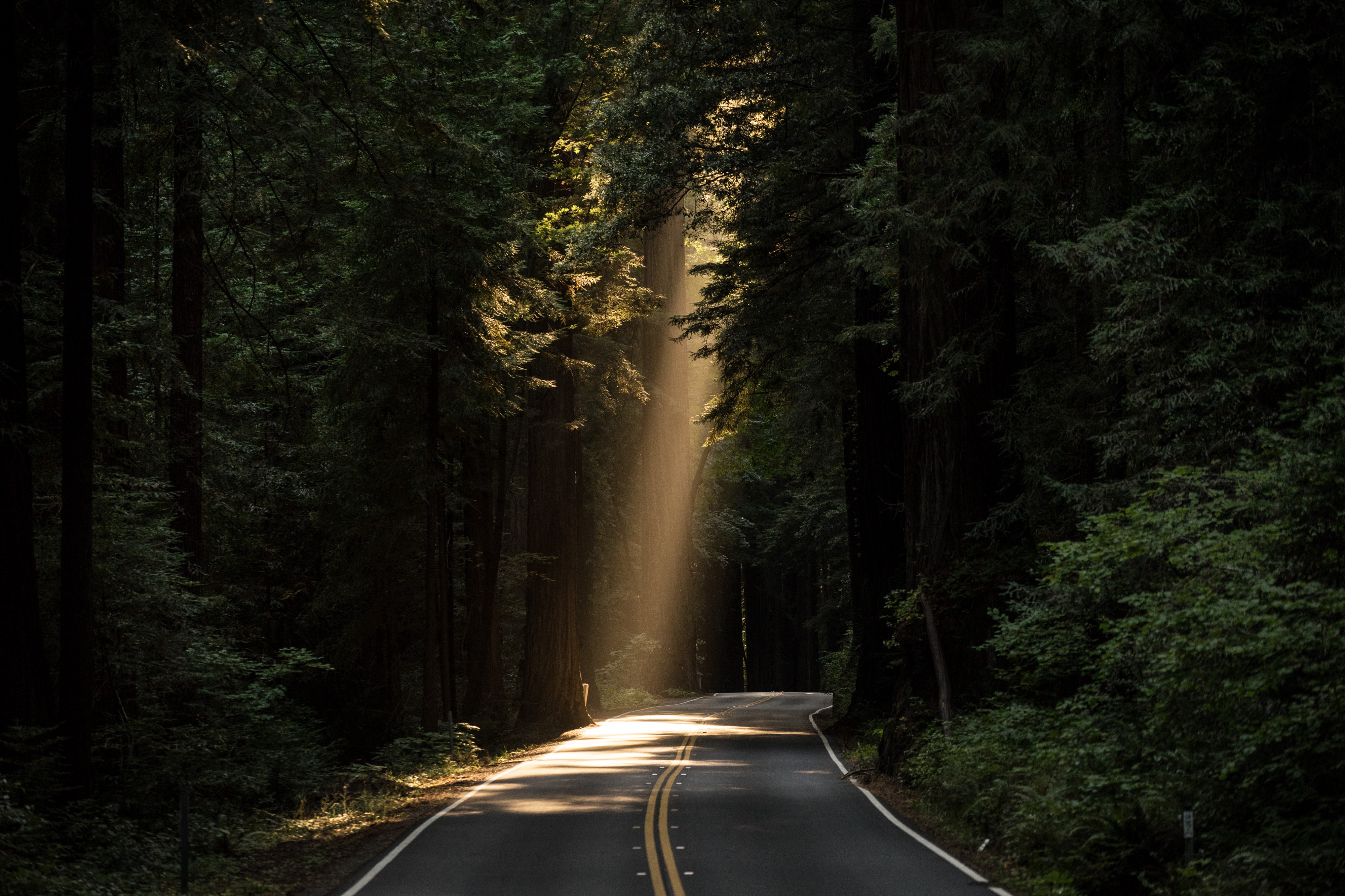 A road in a forest with a single beam of sunlight breaking through the trees