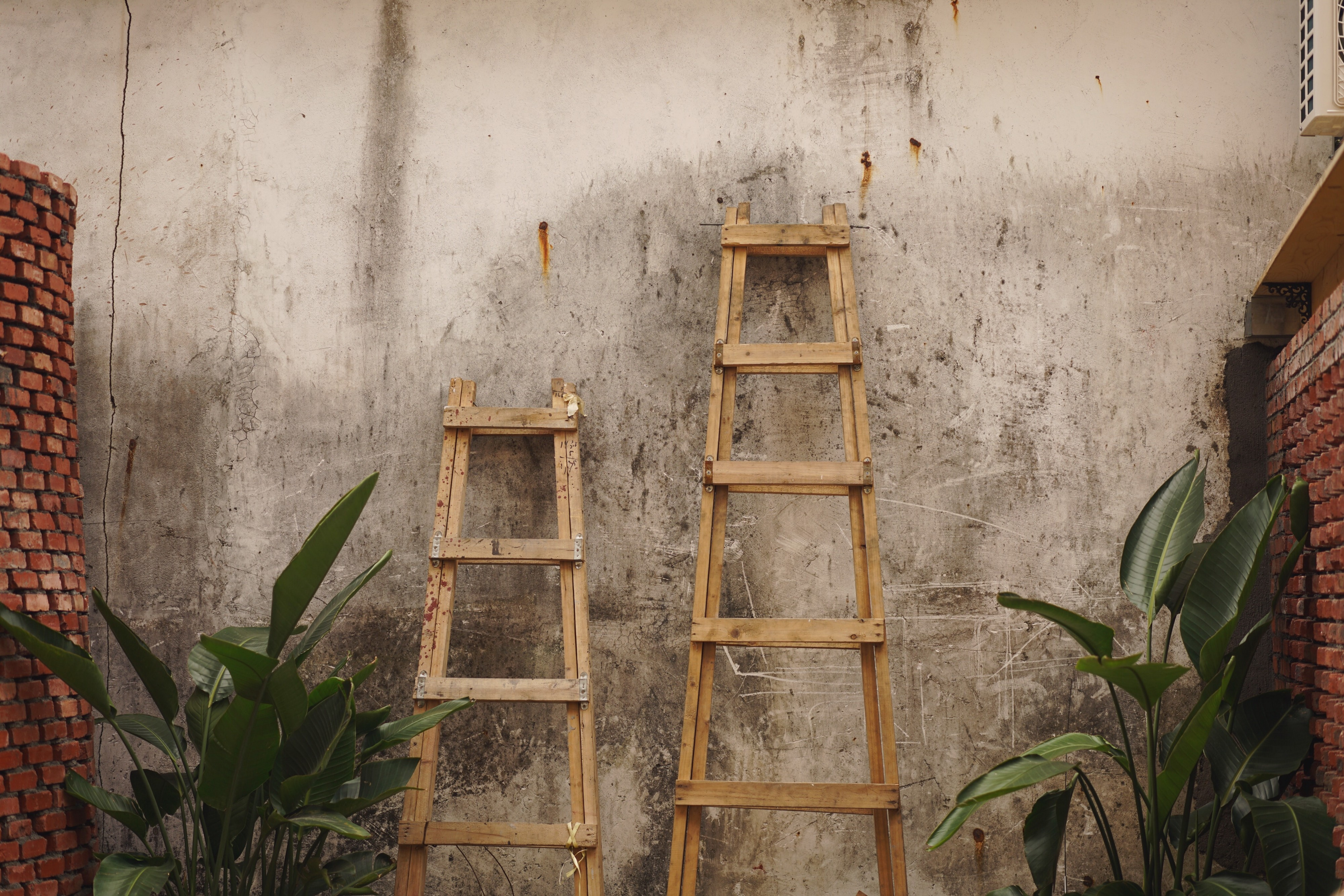 Two wooden ladders leaning against a cement wall, with brick walls and plants to each side