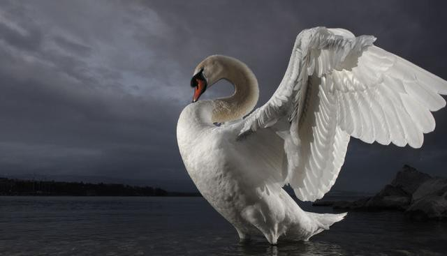 climate change is a white swan rupert read medium