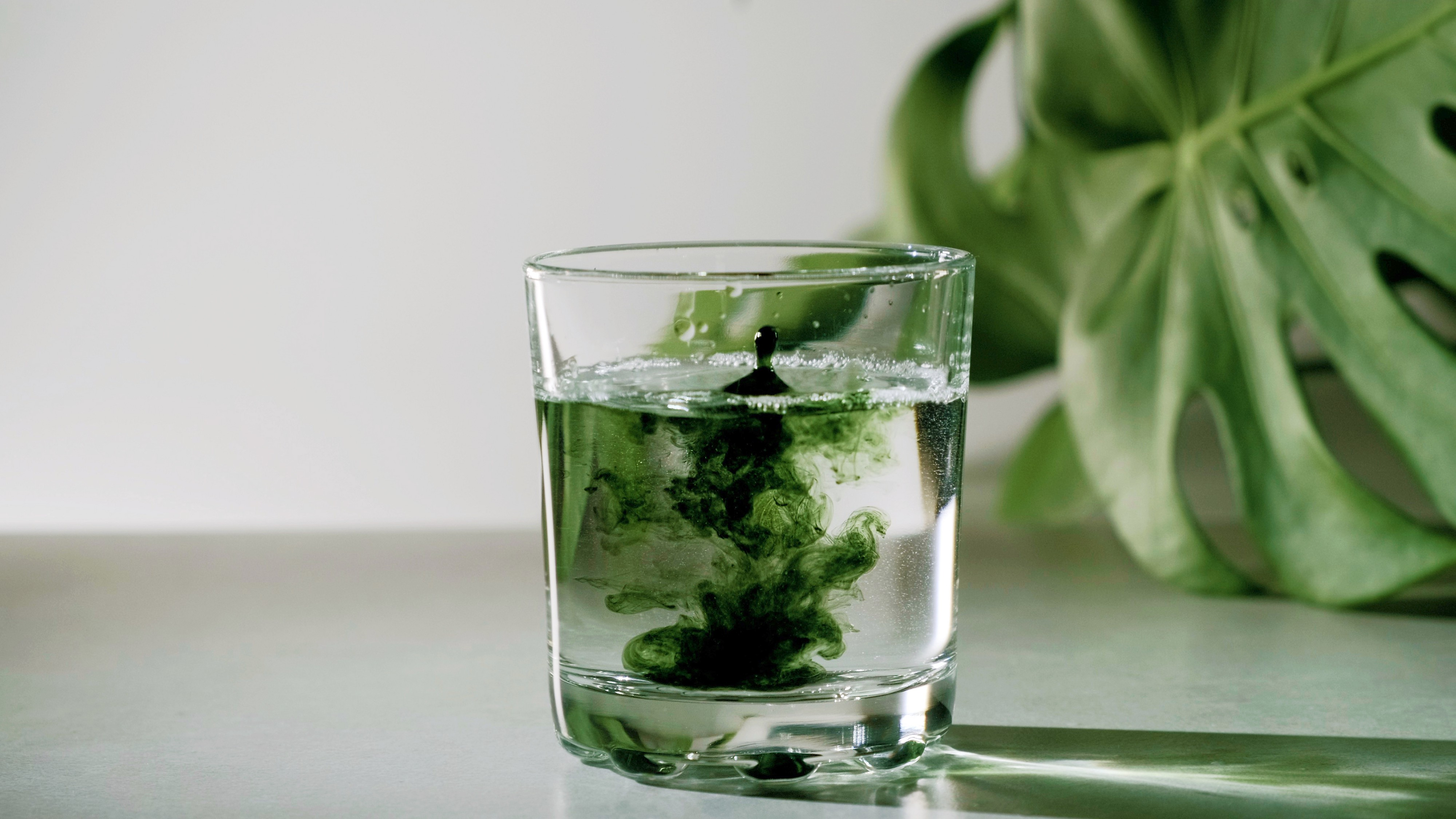 Why Gen Z is Obsessed with Liquid Chlorophyll | by Kristen Eleanor | Not  Kale Salad | Medium