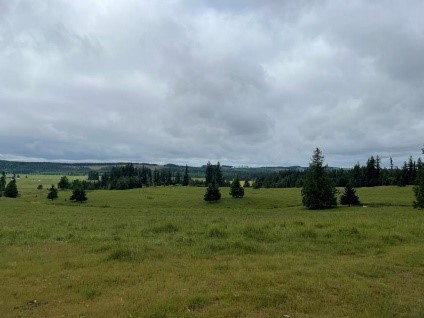 Large grassland with trees of different sizes in the distance.