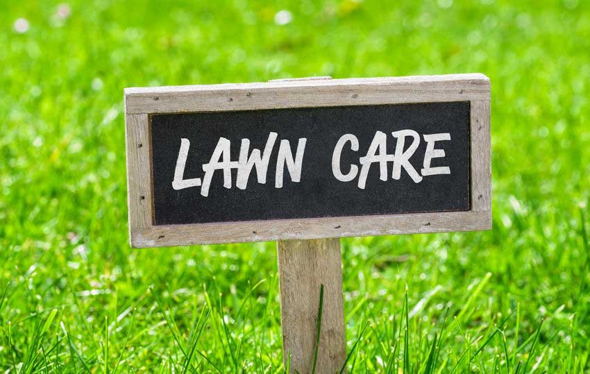Top Four Summer Lawn Care Tips to Keep Your Grass Green | by Doraagri tech  | Medium