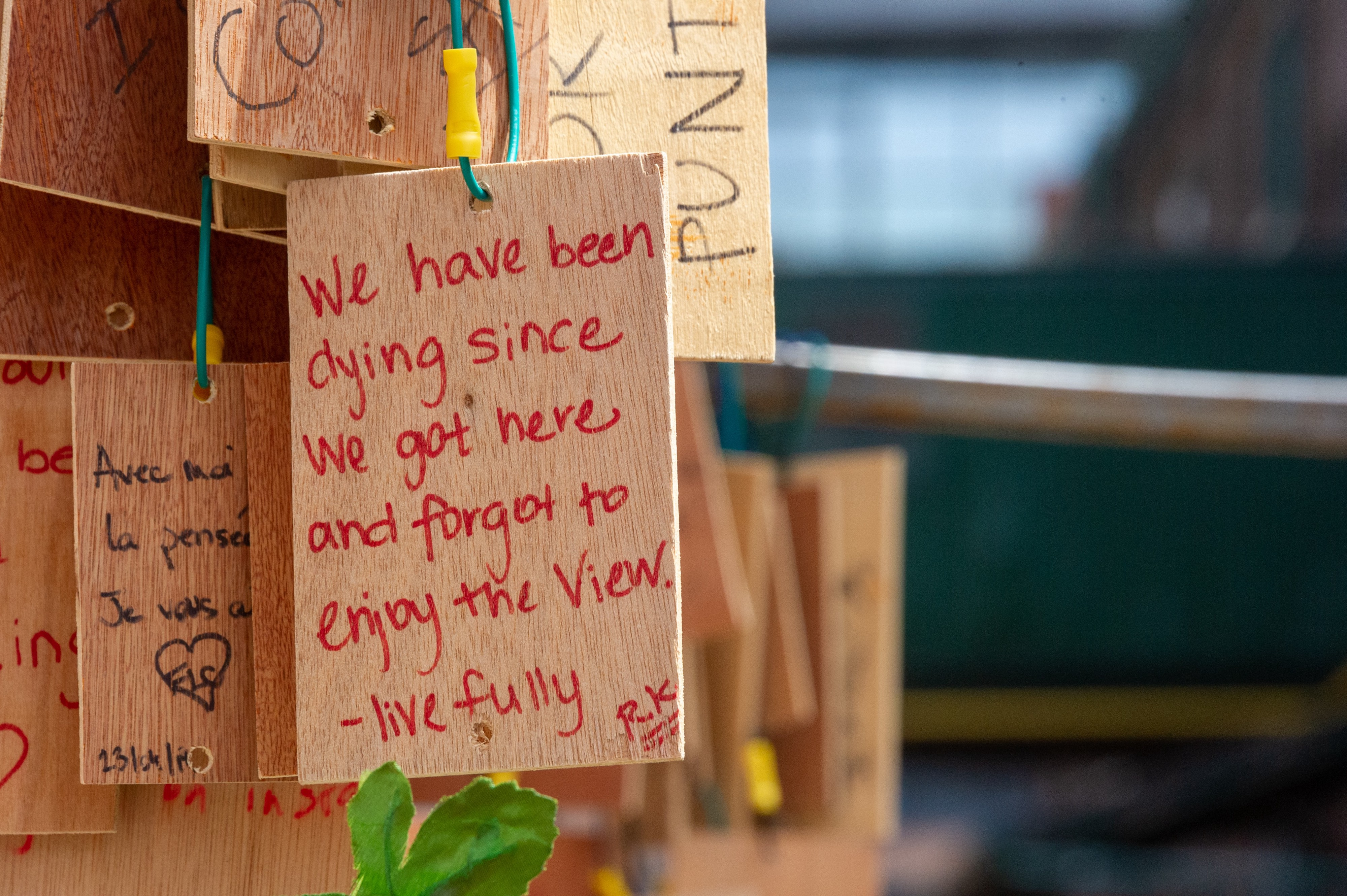 Handwritten sign on a wood tag amidst a cluster of wooden tags: We have been dying since We got here and forgot to enjoy the view. live fully.