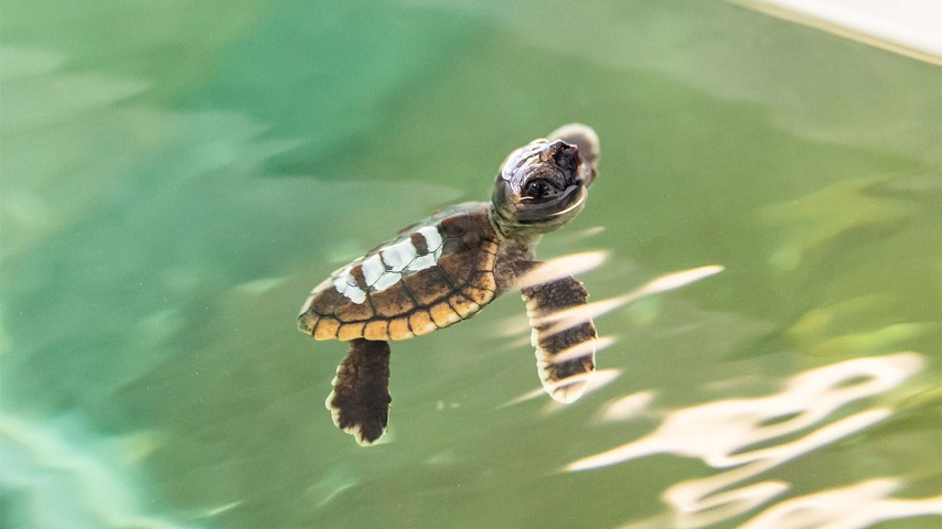 Image result for images of turtles
