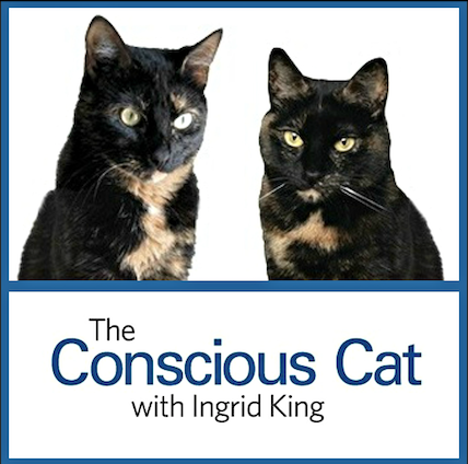 "Photo of two black-and-tan torties above the text, ""The Conscious Cat."""