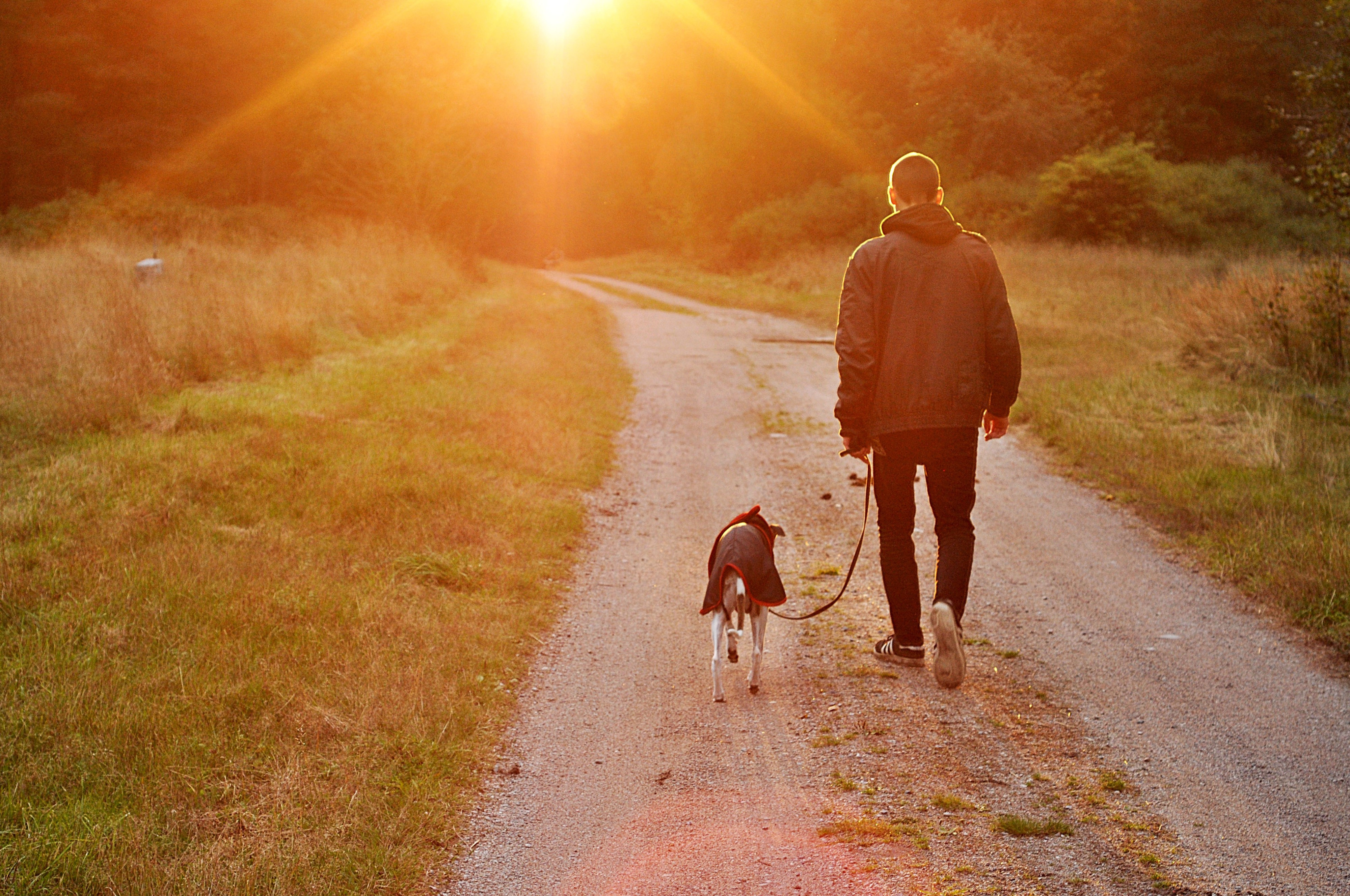 A picture of myself and one of my dogs, a rescue by the way, walking into a sunset.