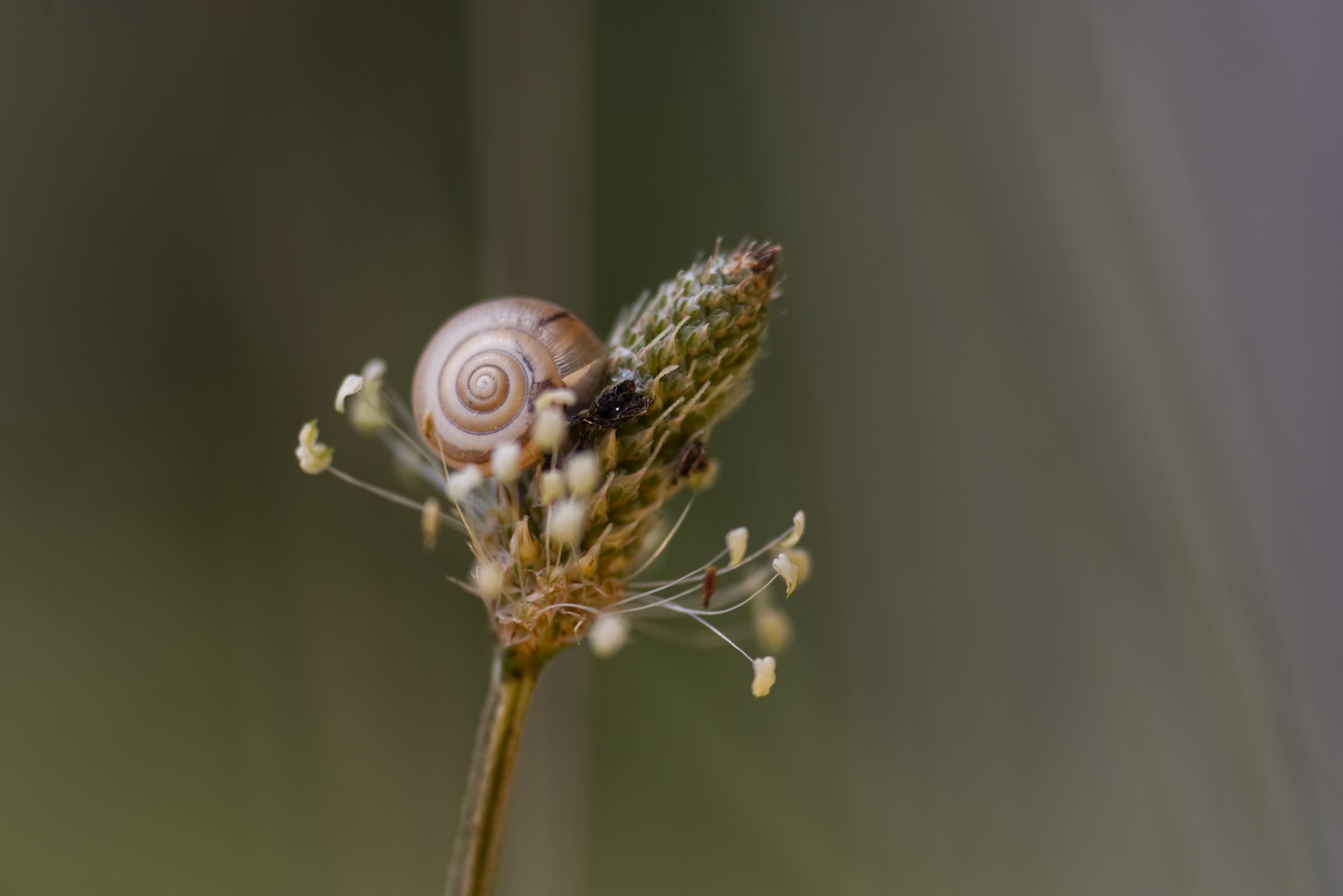 snail climbing up a plant on their way to creative success