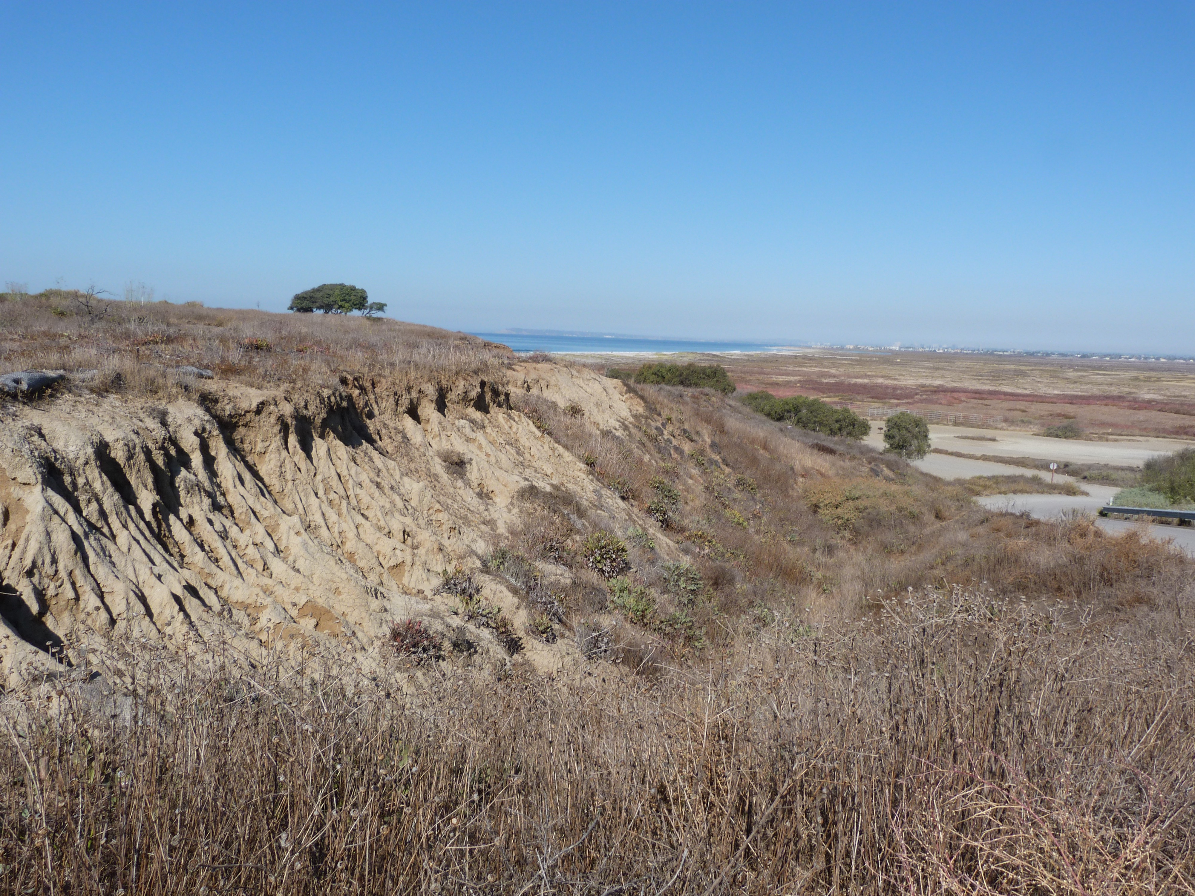 An eroding cliff is covered, above and below, with dry  gray and brown vegetation. In the distance is the Pacific Ocean.