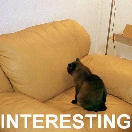 A cat looking at a sofa. A website has to be interesting to be SEO optimized