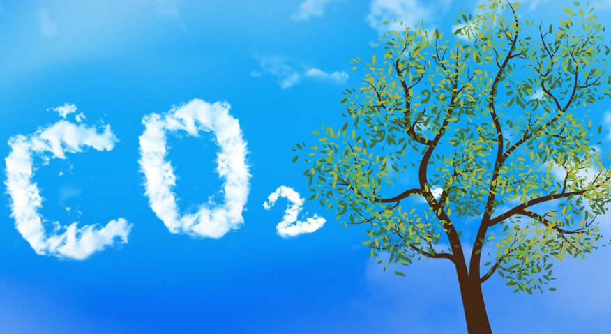 Trees and Carbon Dioxide: What Is the True Connection?