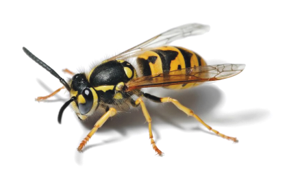 Image shows a wasp, which actually is the logo of the OWASP organization.