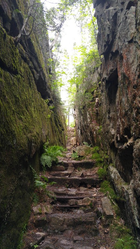 A narrow, rocky path through the wooded nature