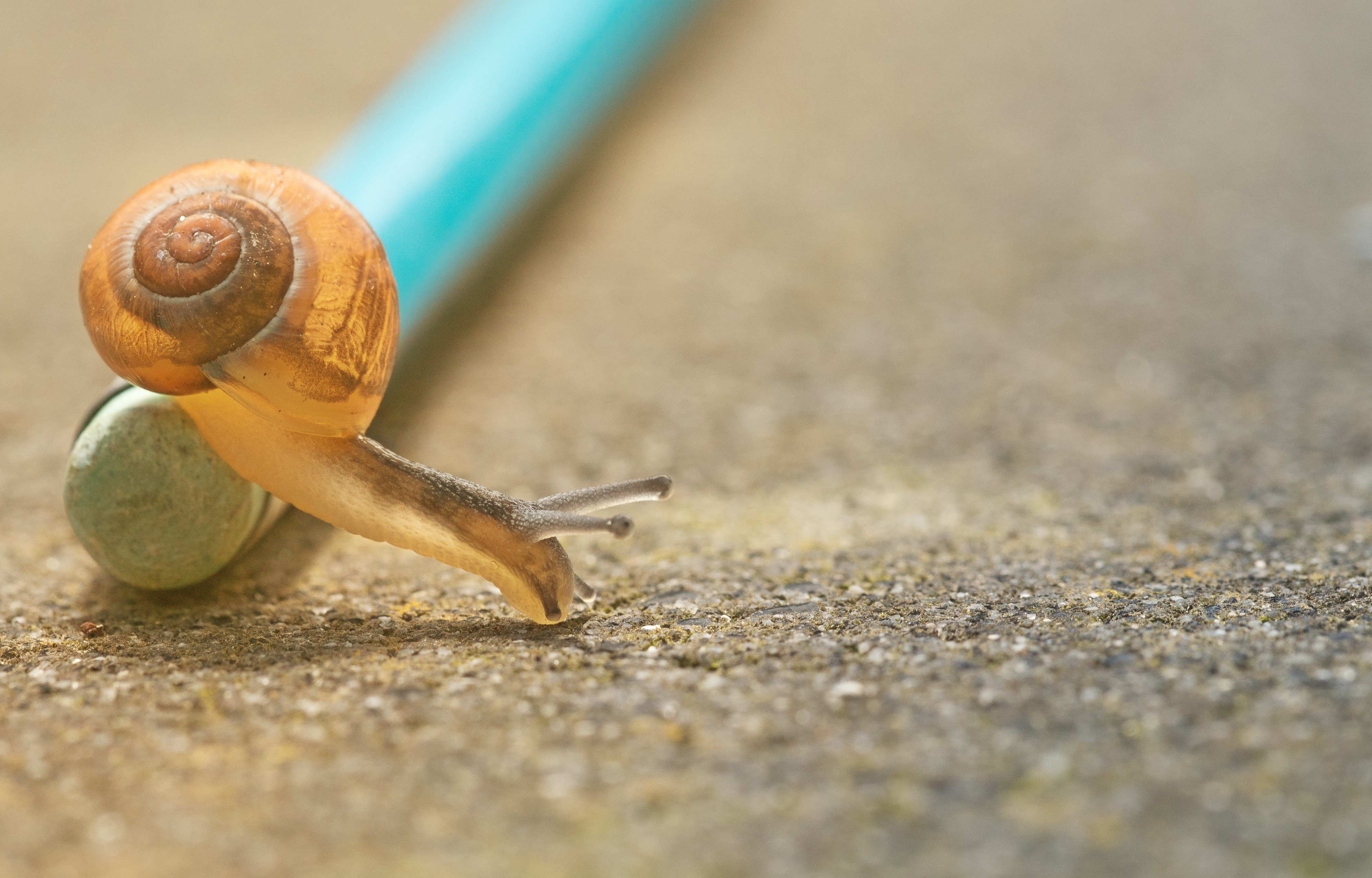 snail sliming over a writing implement