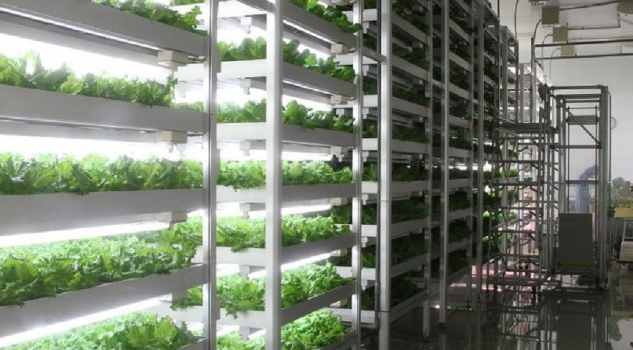Vertical Farming, Plant Factory Market Trend, Growth, Size, Application &  Forecast 2025 | by Digambar Vaidya | Medium