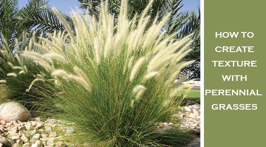 How To Create Texture With Perennial Grasses Terra Greenhouses