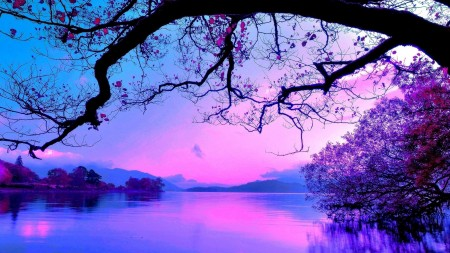 purples and blues of lake with branch over head