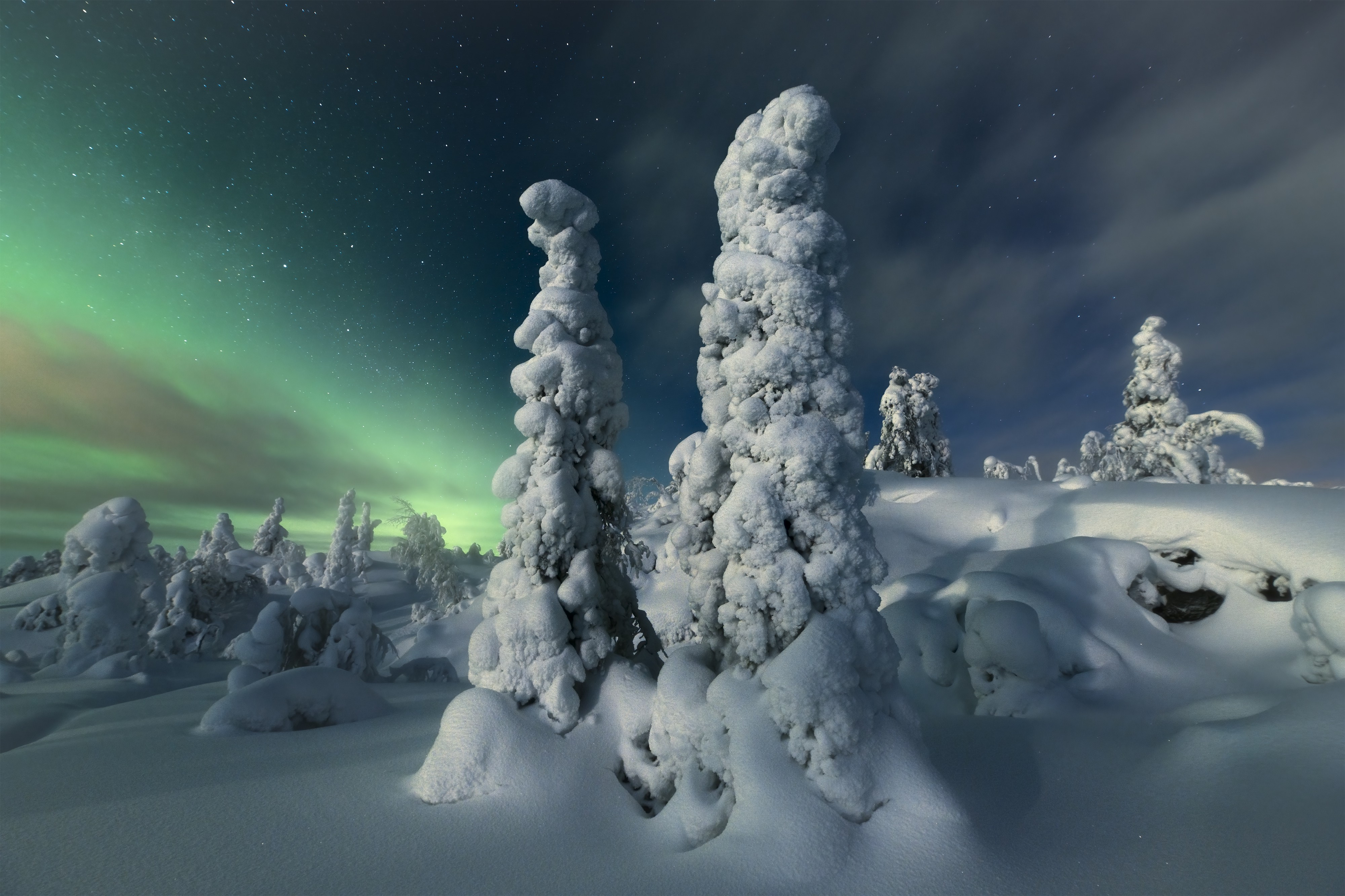 A background of green northern lights and a foreground of trees covered in so much snow they look like abstract statues