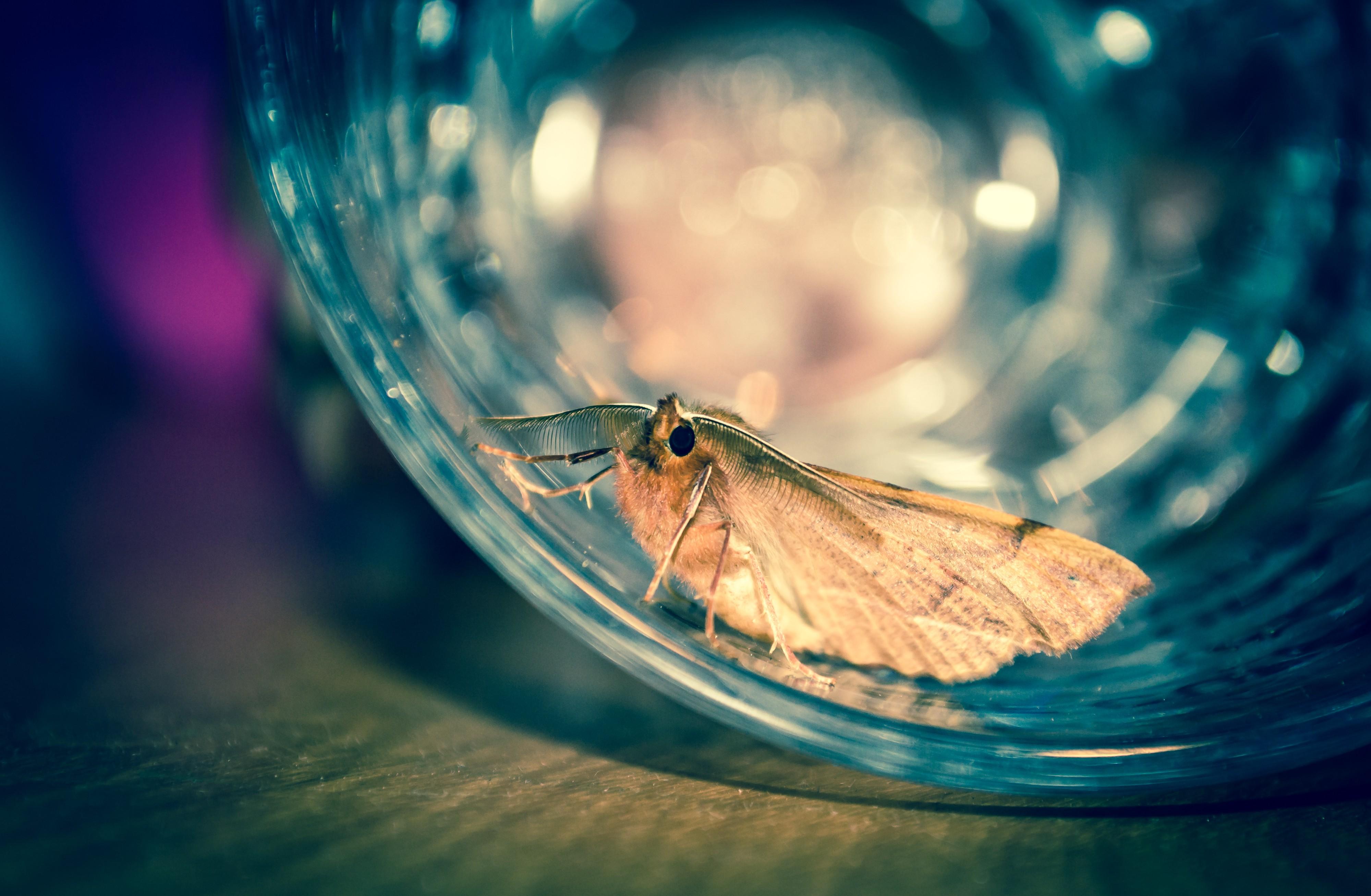 a moth in an open glass container
