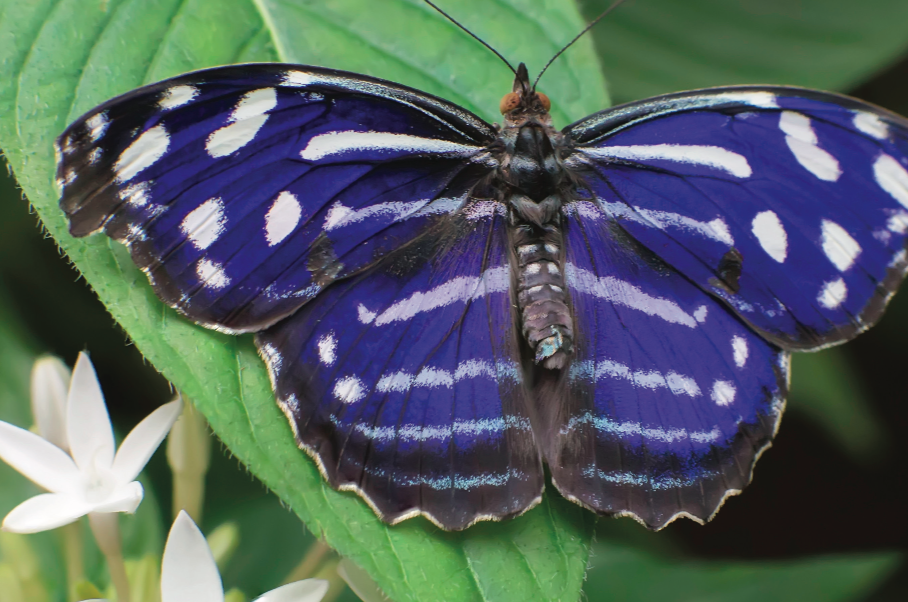 1*HiScl41j9A0Rmw2jwlTkbw - Butterflies Are Blooming Grand Rapids Frederik Meijer Gardens March 1