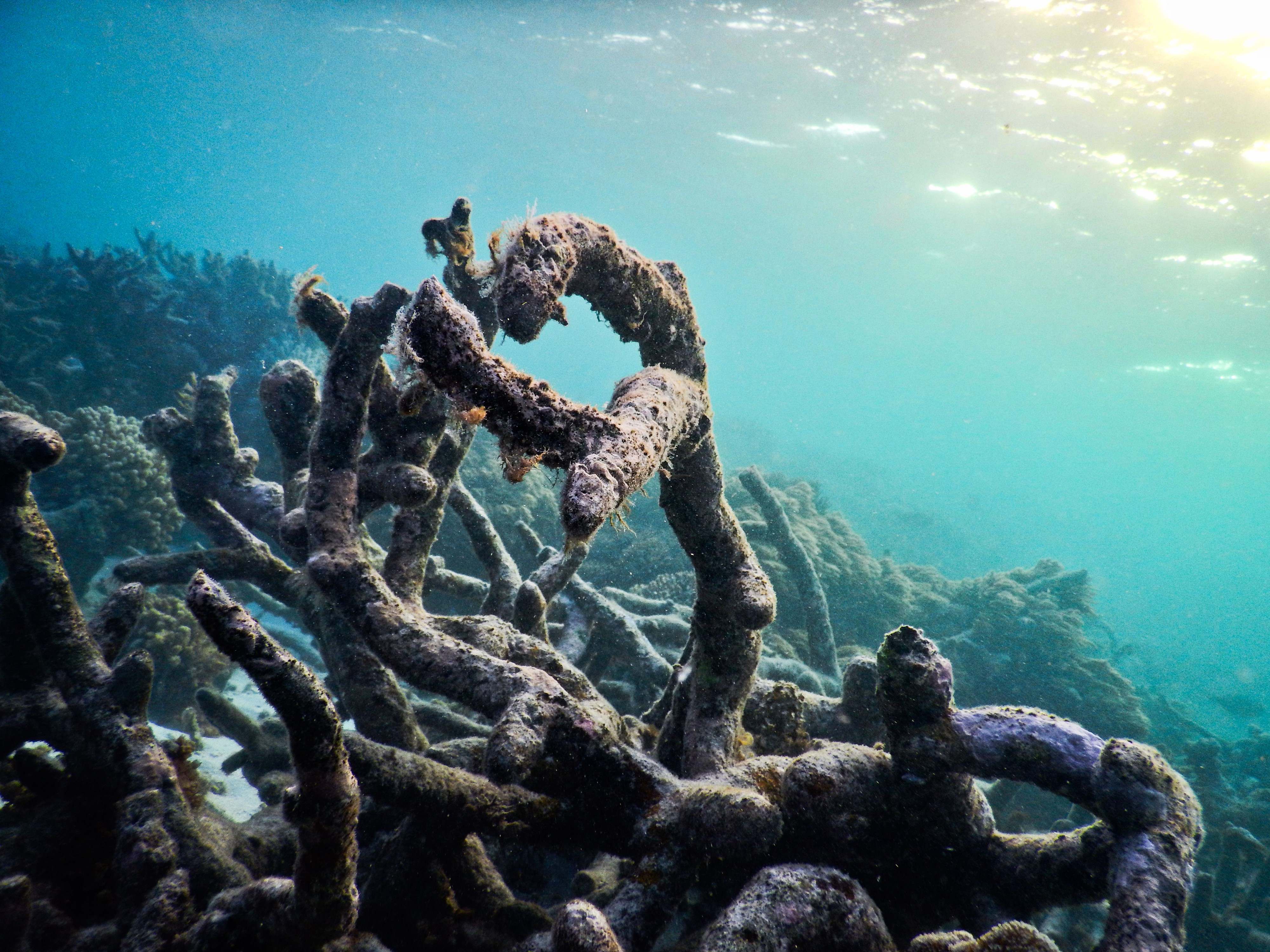 Scientists Use Recordings Of Healthy Coral Reefs To Lure
