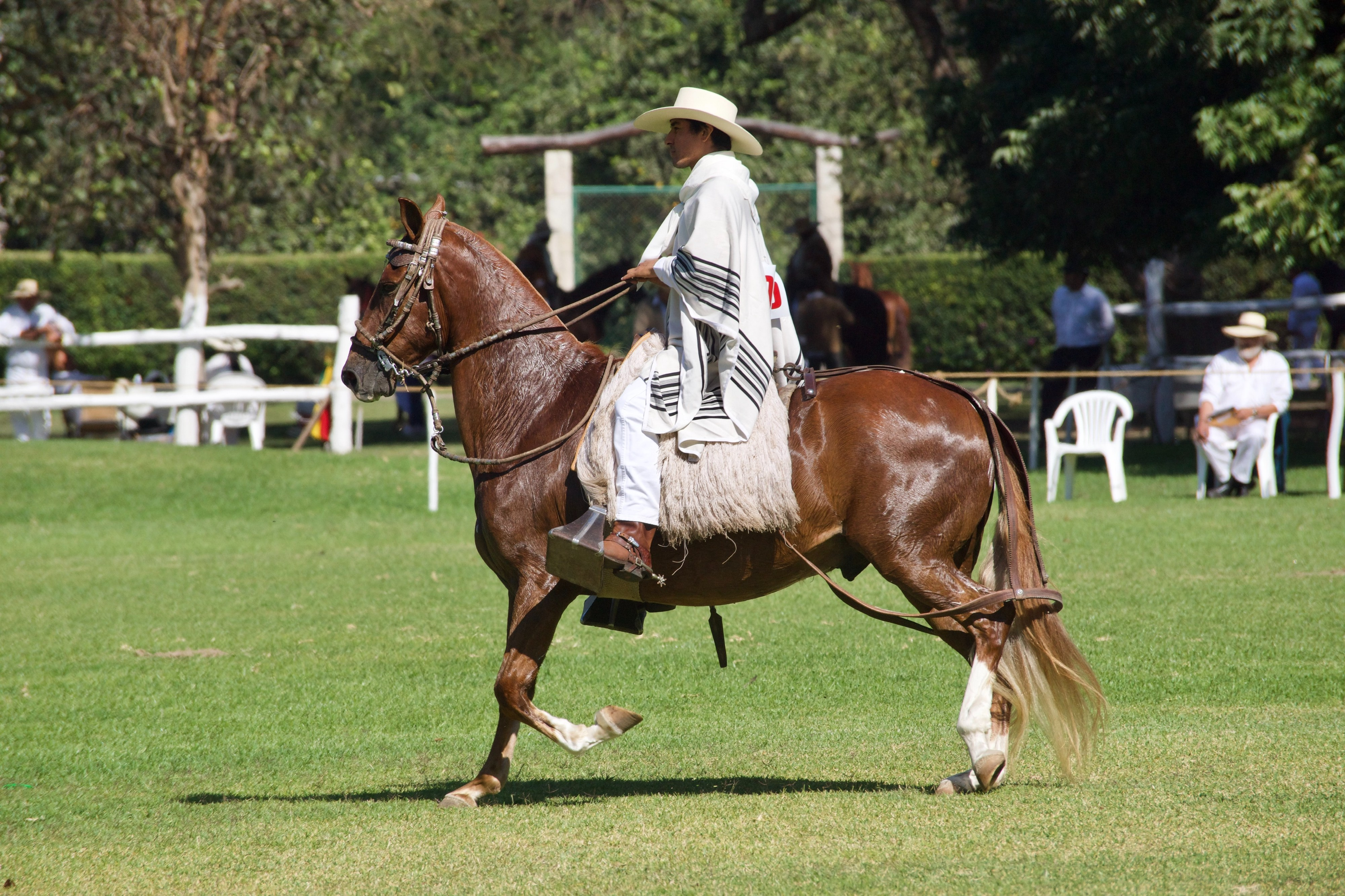 Horse Colors You Need To Know As Adults With Pictures By Rider For Life Medium