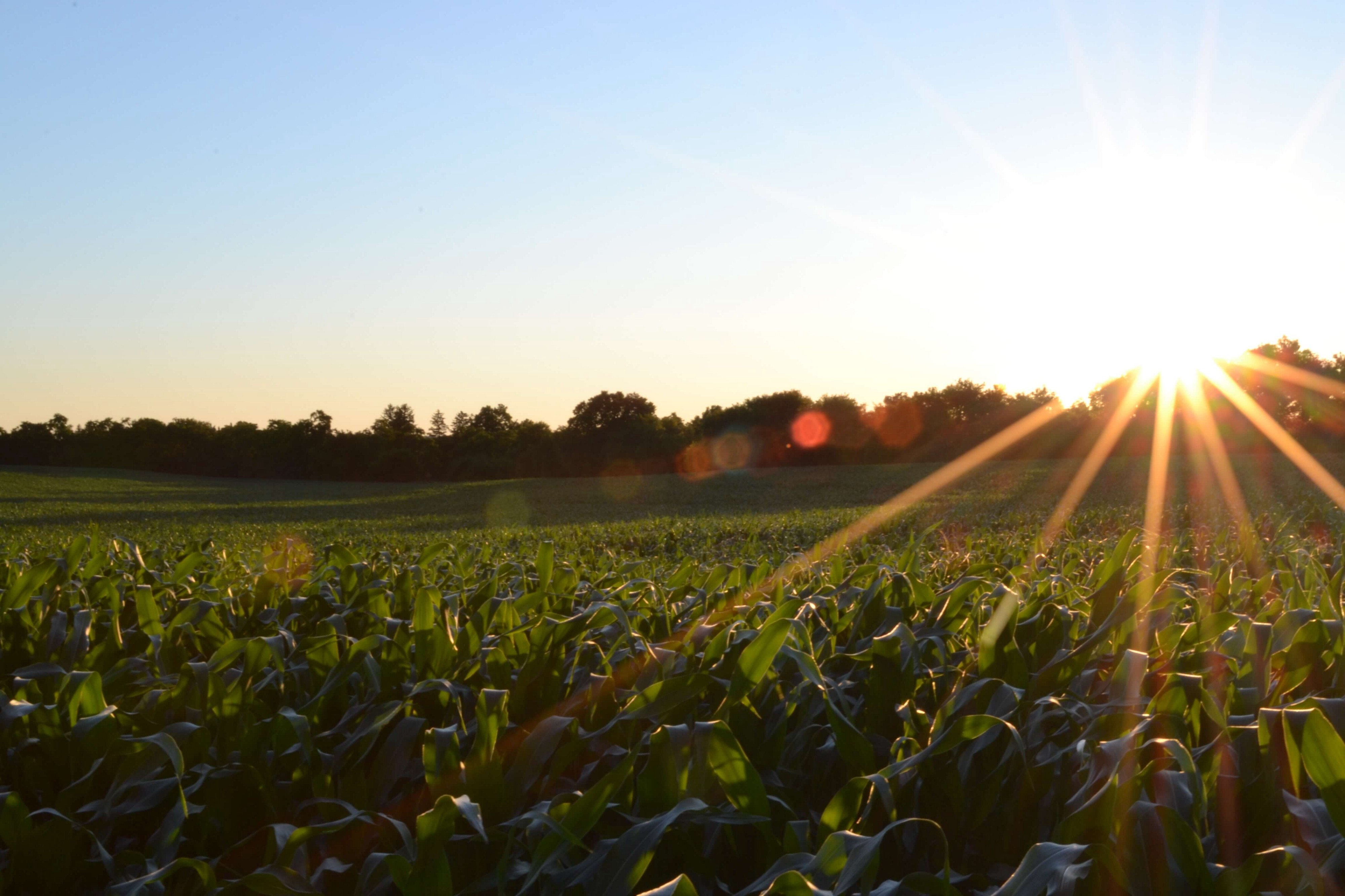 IoT in Agriculture: Why It Is A Future of Connected Farming