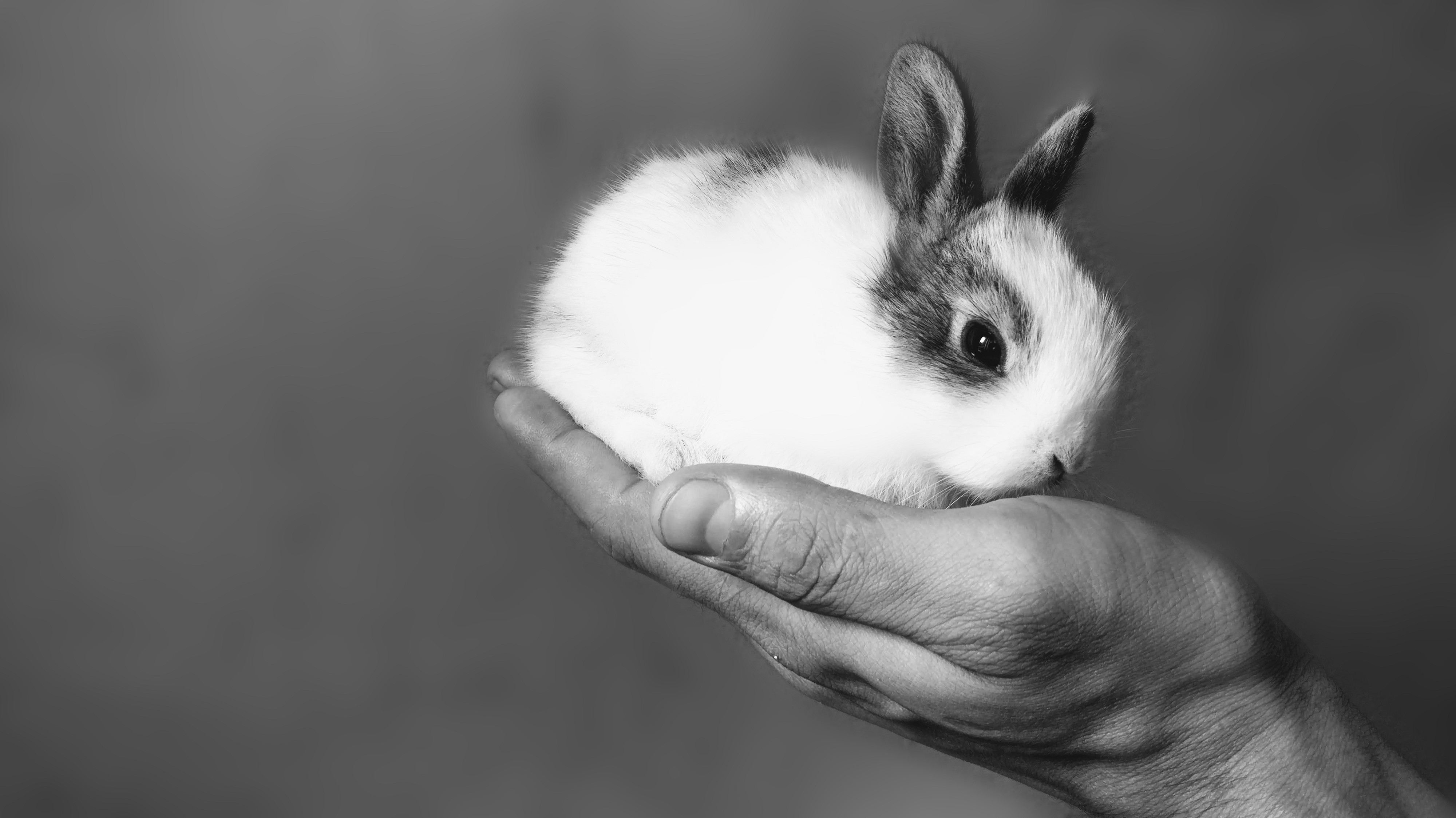 A black and white photo of a small baseball sized bunny sitting in someone's outstretched hand