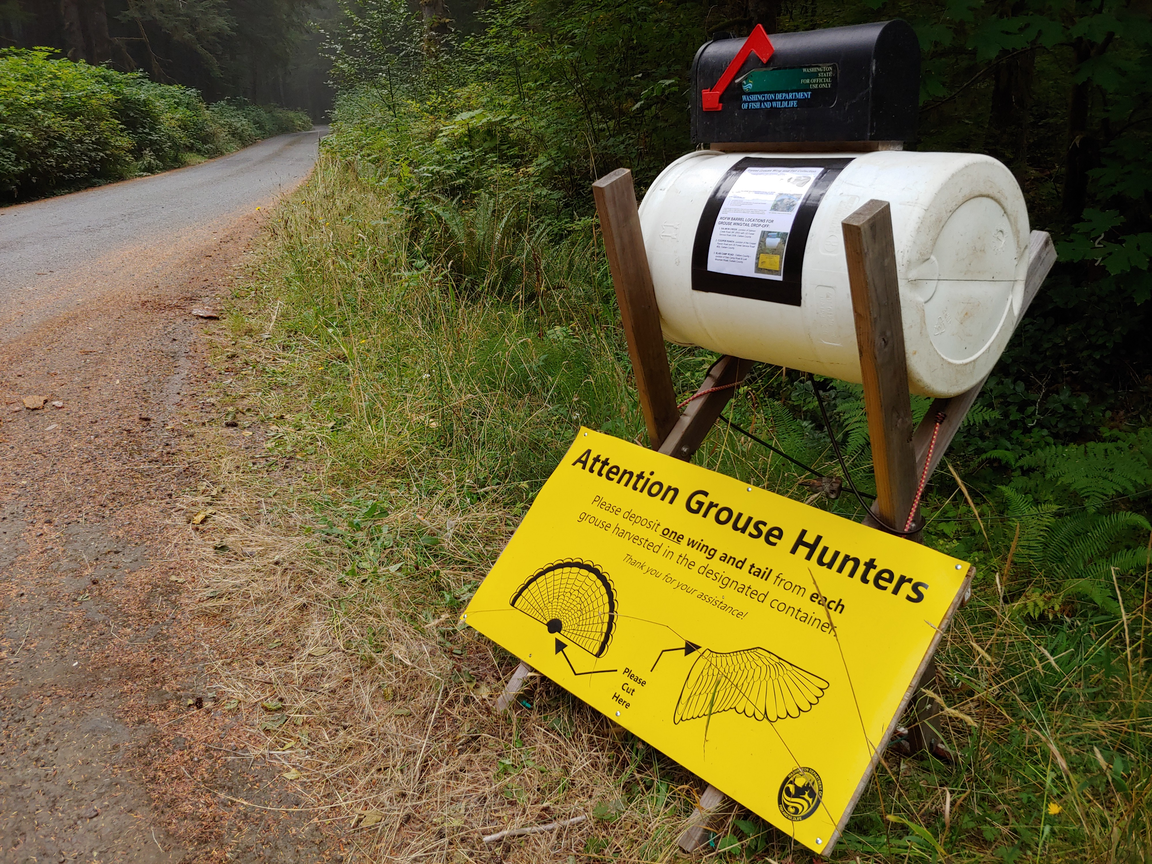 A WDFW grouse wing and tail collection barrel is seen at Forest Service Road 29 in Clallam County. (Michael Foster/WDFW)