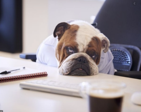 Dog bored and sleepy looking at a desk. How to improve your morning.