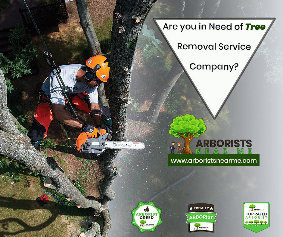 Tree Removal Service Near Me Are You In Need Of Tree Removal By Arborists Near Me Arborists Near Me Medium