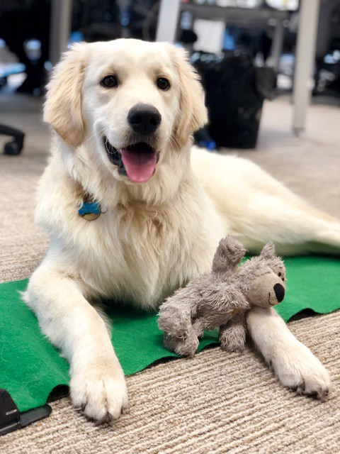 A Day In the Life with Ollie, a Melbourne Eventbrite Office Dog