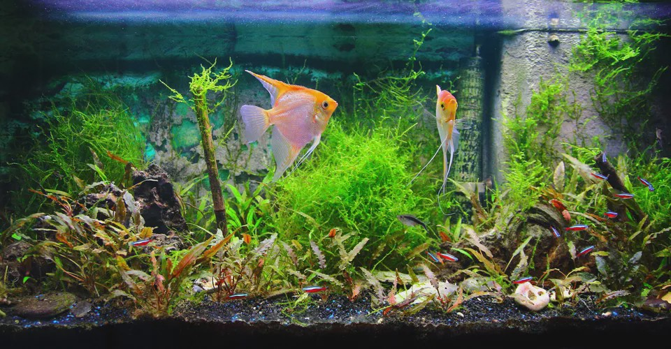 Enhance Your Aquarium Water Quality with Biofilter | by Yohanes Theda |  Medium