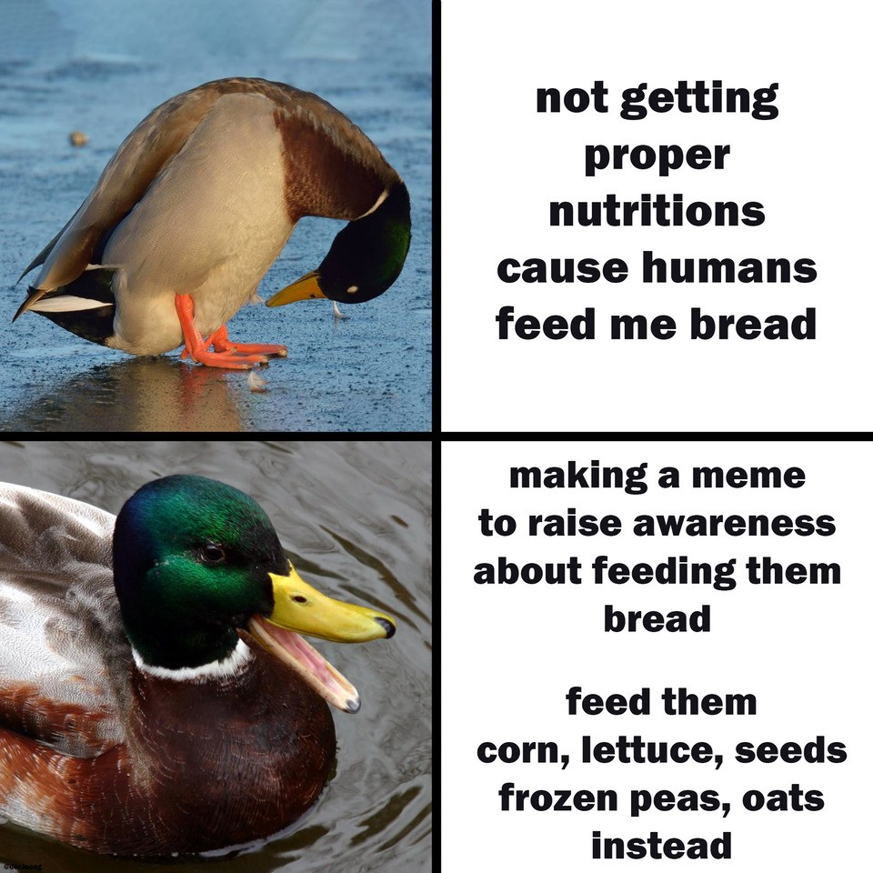 Polite Reminder Do Not Feed Birds With Bread And By Nadine Medium