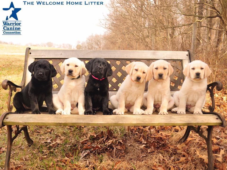 Warrior Canine Connection's Welcome Home Litter Moves On
