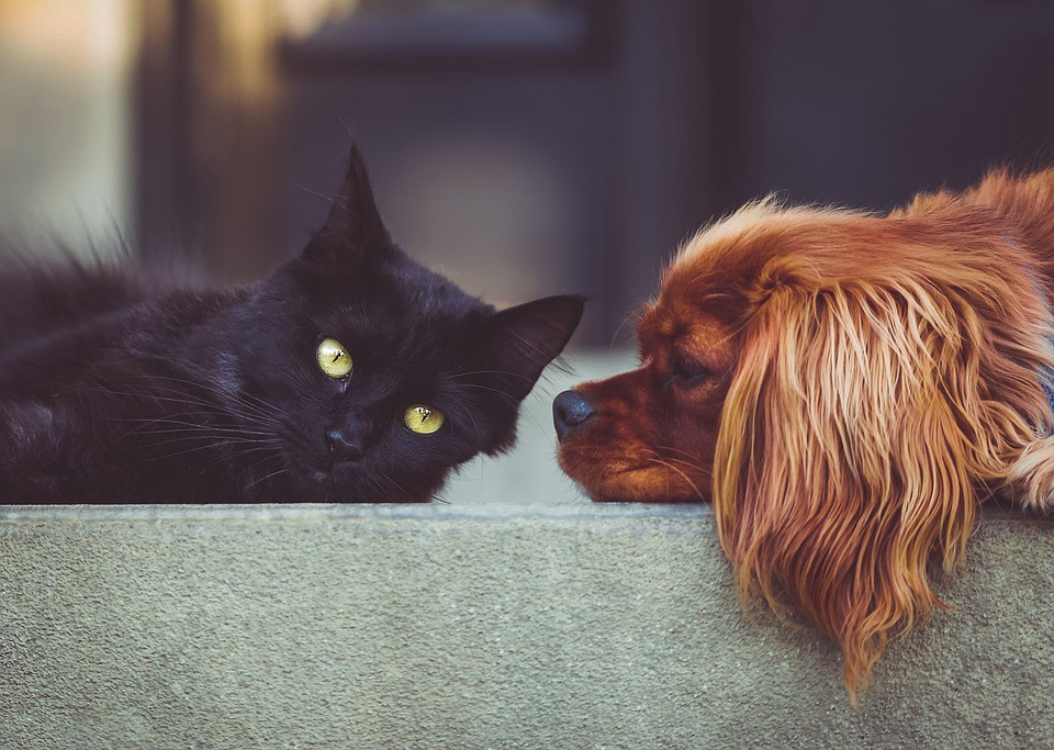 Using Pytorch For Kaggle S Famous Dogs Vs Cats Challenge Part 1 Preprocessing And Training By Won Seob Seo Predict Medium