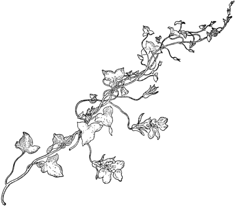 a black & white drawing of a flowered vine