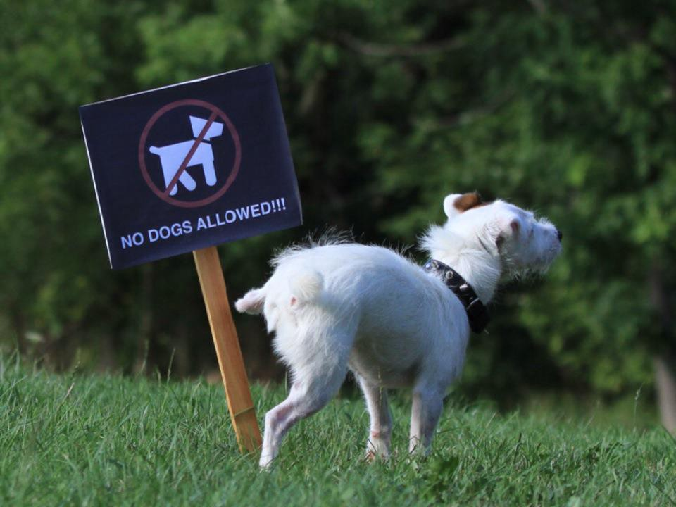 Don T Pee On That How To Stop Dog Marking Behaviours By Mccann Dog Training Medium