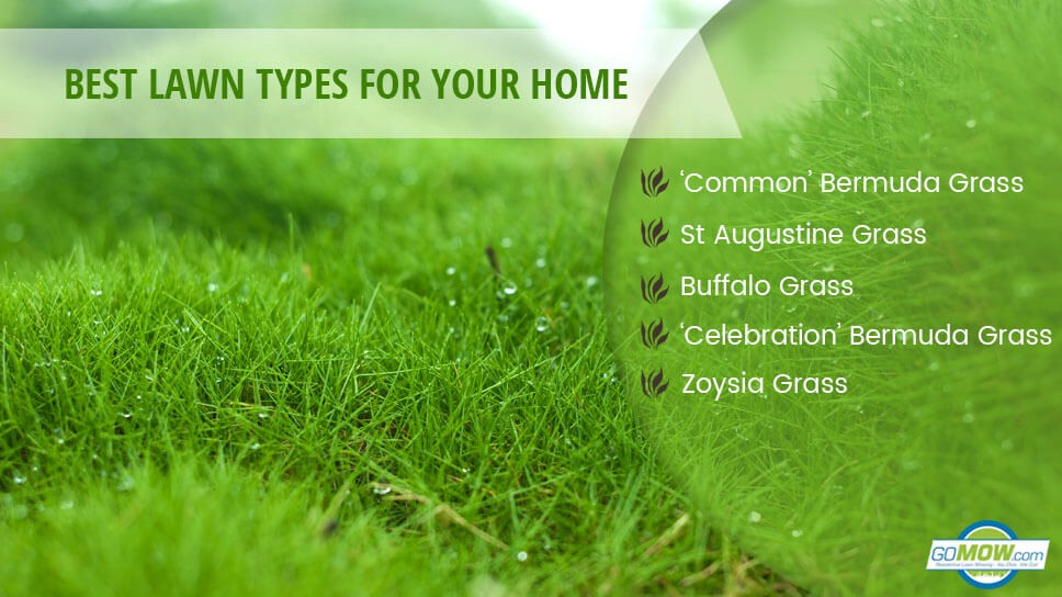 Types Of Lawns Which Lawn Type Is Suitable For Your Home