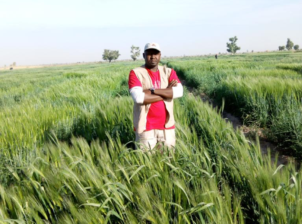 Kachalla, in a wheat field outside Maiduguri, Nigeria.