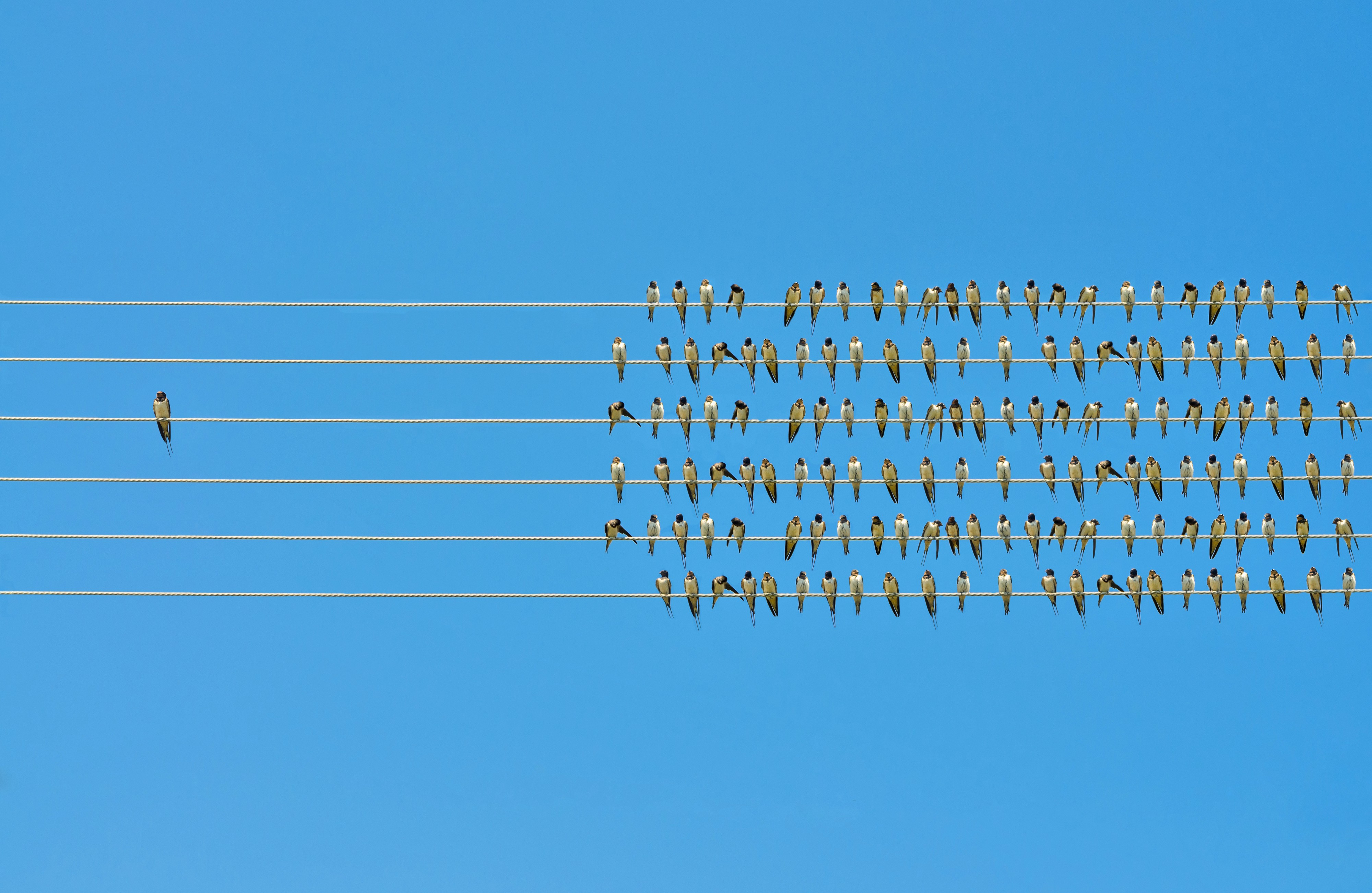 Birds on 4 wires. One bird alone and the other in a group.