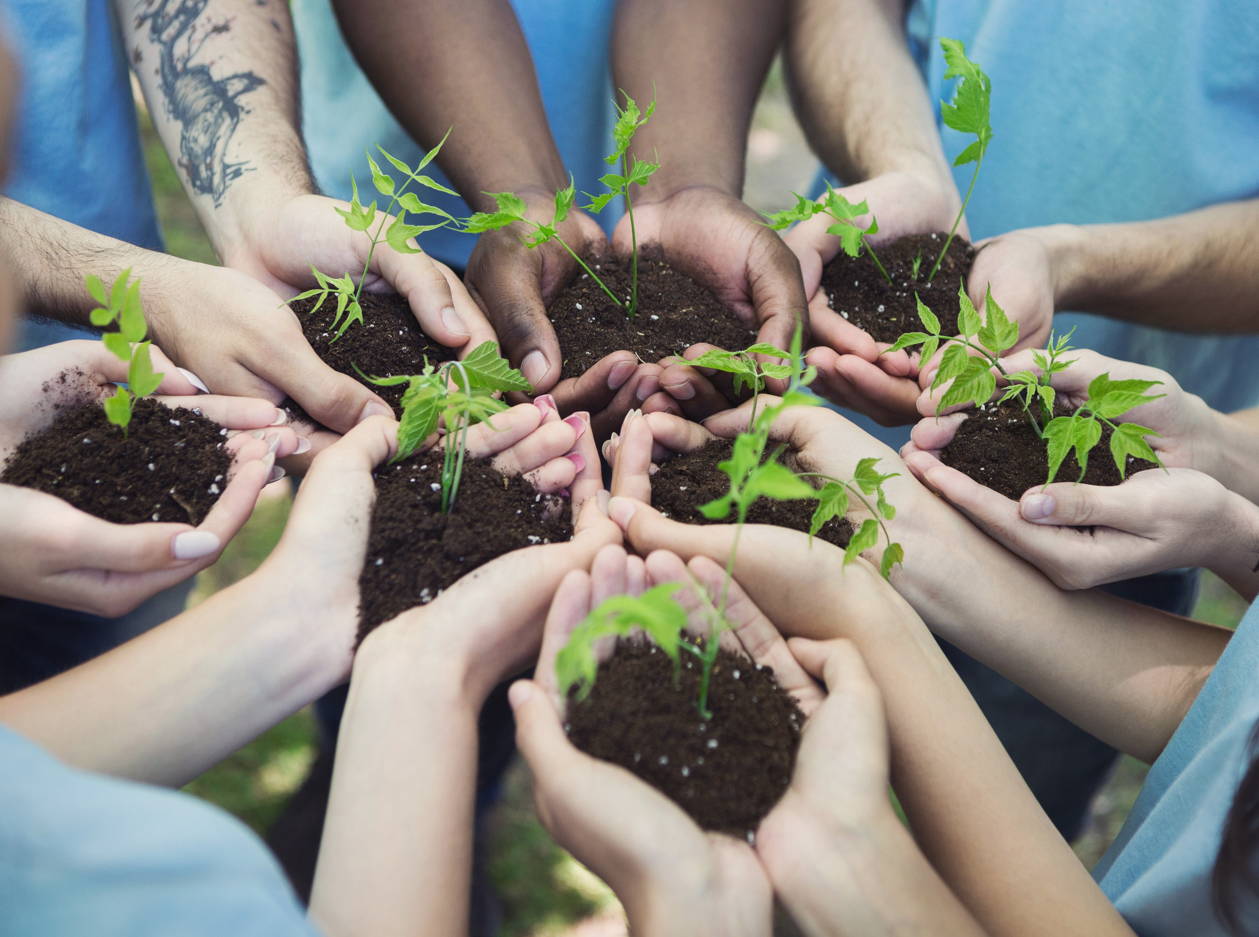 8 pairs of hands held out in a circle, each holding soil and a seedling tree, representing socially responsible businesses