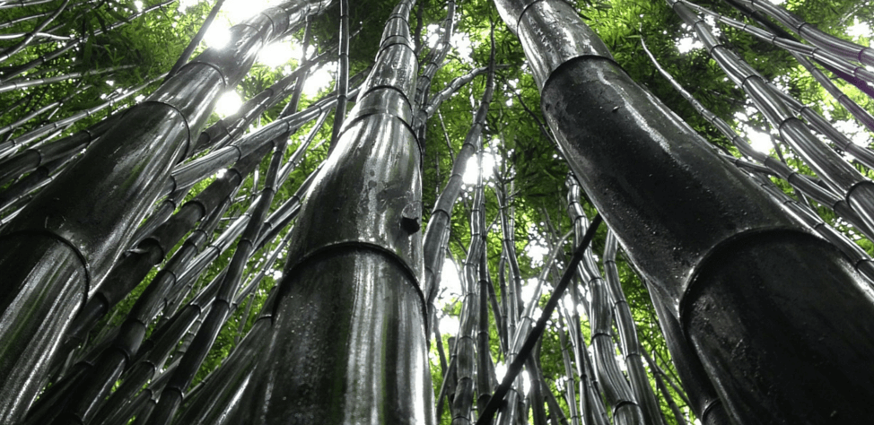 Monday Motivation Week 15 Lessons From A Chinese Bamboo Tree