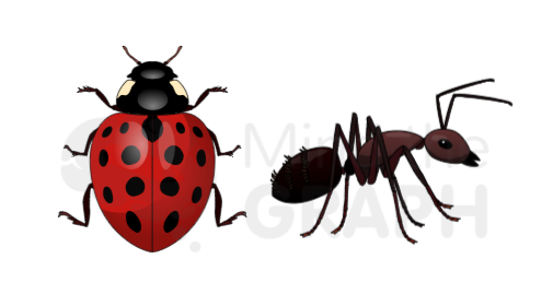 coccinellidae_ant_insects_mind_the_graph